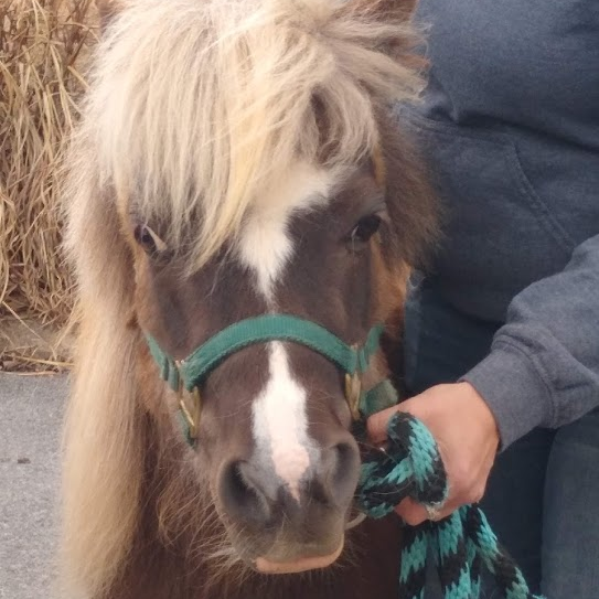We had a blast setting up at URBN Flavourhaus Park Place on Sunday for their autism awareness event! We met plenty of new people (and ponies) while re